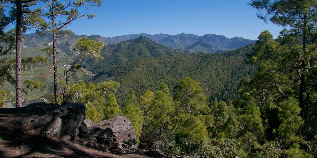 Pinar de Tamadaba, Gran Canaria